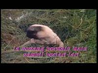 lagu anak - Helly Guk Guk Guk - Lagu Anak Indonesia - - YouTube.mp4