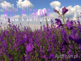 Wild_Flowers_lia.pps